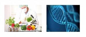FoodDNA-300x129